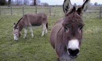 Chuyện lừa và ngựa: Cuộc sống là do bạn lựa chọn, đừng sợ hãi để rồi nuối tiếc mãi về sau