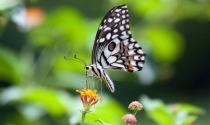 """Ngưng """"ảo tưởng"""" mình là rồng, là hổ… hãy làm việc chăm chỉ như kiến và sống tự do như những chú bướm"""