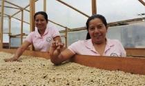 Quyết khởi nghiệp với cà phê organic