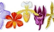 Người đưa hoa lan từ 'thượng lưu' ra đại chúng lên trang chủ Google
