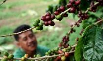 Đại dịch Covid-19 đang đẩy giá cà phê tăng cao trên toàn cầu