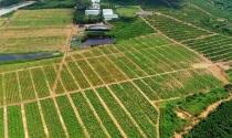 Khu trang trại và nghỉ dưỡng Farmstay G7 Bình Châu