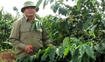 Cựu chiến binh làm giàu tiền tỷ từ trồng nông sản