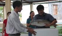Lãi chục tỷ một năm nhờ nuôi cá giống