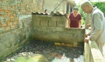 U80 vẫn hăm hở nuôi ếch, kiếm trăm triệu
