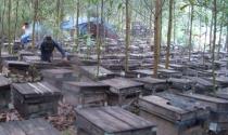 Thu hàng tỷ đồng mỗi năm từ ong