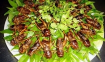 Kinh doanh côn trùng vốn ít, dễ tiêu thụ