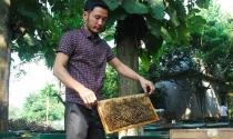 Tỷ phú từ nuôi ong lấy mật
