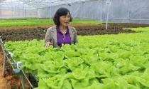 Bà chủ vườn cà chua khổng lồ chuyển sang trồng rau thủy canh