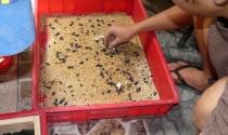 Nuôi côn trùng kiếm tiền tỷ ở Việt Nam