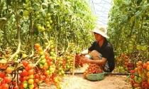 Anh em 9X kiếm tiền tỷ mỗi năm nhờ nông trại rau sạch