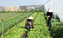 Khởi nghiệp: Trồng rau trong nhà lưới