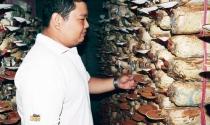 Chàng kỹ sư điện kiếm 400 triệu đồng mỗi năm từ trồng nấm