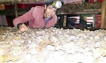 Khởi nghiệp từ nông trại nấm