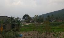 Chuyển đổi đất rừng Tam Đảo: Không làm tùy tiện