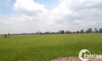 Danh sách cụ thể 28 dự án nhà ở, công viên, khu công nghiệp cần thu hồi đất lúa trên 10ha
