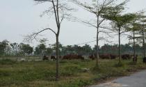 """Sau 10 năm, Dự án Khu đô thị AIC Mê Linh vẫn chỉ để """"chăn bò"""""""