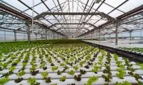 Hà Tĩnh duyệt quy hoạch dự án nông nghiệp công nghệ cao 300 tỉ của FLC