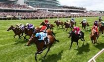 Đà Nẵng sắp có hoạt động cá cược đua ngựa và sân golf tỷ USD