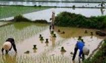 Từ 1/10, thực hiện miễn, giảm thuế sử dụng đất nông nghiệp