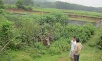 Mua đất quanh Hòa Lạc, dính quy hoạch như chơi