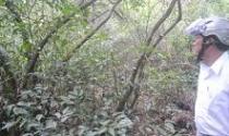 """Thừa Thiên - Huế: Sân golf """"nuốt"""" rừng phòng hộ"""