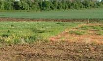 Chính phủ lại đề nghị lùi thời hạn sửa Luật Đất đai