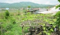 Dân khốn khổ với dự án quy hoạch công viên Lao Bảo