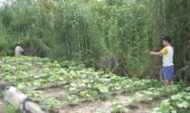 Khu công nghiệp ở ĐBSCL: Trồng lúa, rau màu, thả trâu - bò...