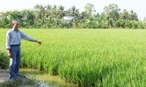 Long An: Nông dân cho người nước ngoài thuê đất trồng lúa