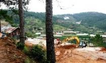 Ai bao che chiếm phá đất rừng làm nhà ở Đà Lạt?