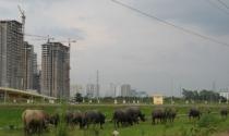 Mở rộng địa giới Thủ đô: Nhiều dự án BĐS thả trâu, nuôi vịt