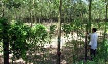 Một mảnh đất bán cho nhiều người - Bài cuối: Vì sao ít xử lý hình sự?