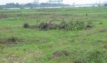 Hai trường hợp được kéo dài thời hạn sử dụng đất nông nghiệp