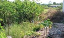 TP.HCM: Ngăn chặn phân lô bán nền đất nông nghiệp trái phép