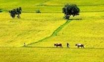 Đề xuất mới về chính sách hỗ trợ bảo vệ, phát triển đất trồng lúa