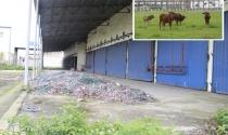 Lãng phí khu công nghiệp bỏ hoang