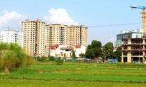 Hà Nội sẽ ban hành quy định mới về đấu giá QSD đất