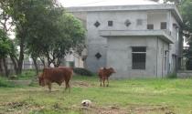 Nhiều dự án đô thị và giáo dục đào tạo ở Vĩnh Phúc bị bỏ hoang