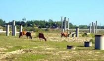 Dự án tỷ đô để... chăn bò: Chiếc bánh vẽ đầy cay đắng