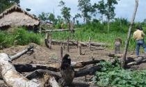 Nhiều dự án thuê đất rừng ở Đắk Lắk sai phạm, chưa xử lý dứt điểm