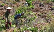 Giải quyết vấn đề đất đai nhức nhối tại các nông, lâm trường