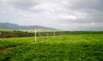 Mối lo từ những dự án chăn nuôi nghìn tỷ ở Tây Nguyên