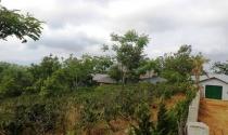 Biệt thự trái phép trong rừng phòng hộ: Sai từ năm 2013