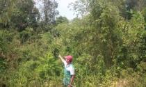 Bình Phước: Dân chối bỏ hàng ngàn sổ đỏ