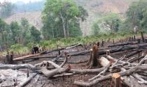 Giao đất rừng tràn lan sai nguyên tắc