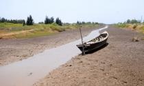 Việt Nam vay WB 310 triệu USD để chống ngập mặn ở Đồng bằng sông Cửu Long