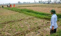 Cấp sổ đỏ đất nông nghiệp sau dồn điền, đổi thửa: Nhiều nơi thiếu quyết liệt