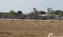 Công khai các tổ chức sai phạm trong sử dụng đất đai