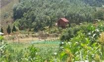 Đất rừng được 'hô biến' thành trang trại sai phép, 'quan huyện' đua nhau làm du lịch